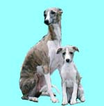 whippet and puppy